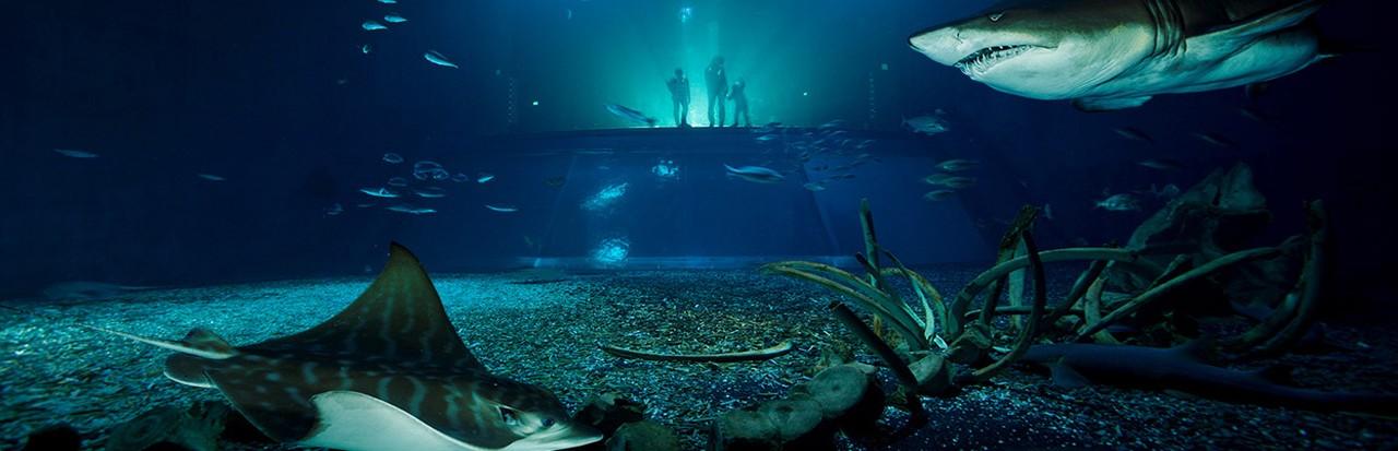 Stralsund z Oceanarium | 90zł
